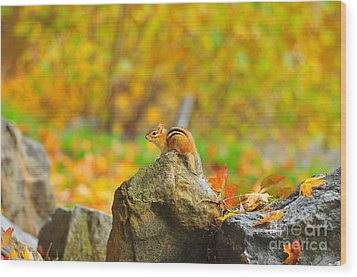 New Hampshire Chipmunk Wood Print by Catherine Reusch Daley