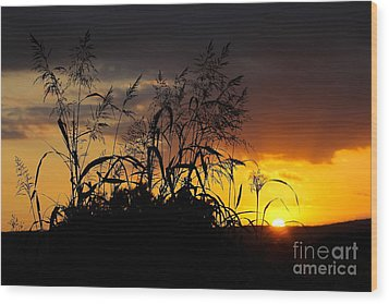 Wood Print featuring the photograph New Image by Everett Houser