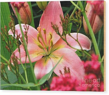 New Lily 2012 Wood Print