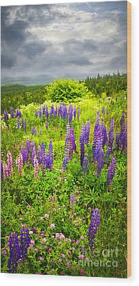 Newfoundland Meadow Wood Print by Elena Elisseeva