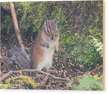 Newport Squirrel Wood Print