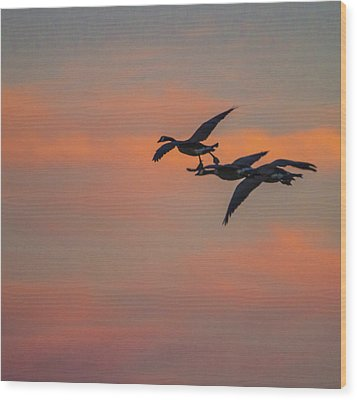 Night Flight Wood Print by Joshua Dwyer