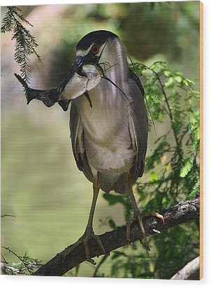 Night Heron With His Catch Wood Print by Paulette Thomas
