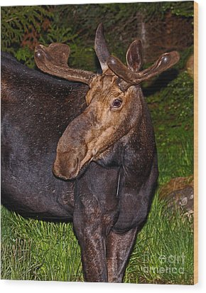 Night Moose 1 Wood Print by Lloyd Alexander