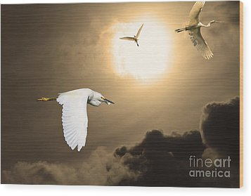 Night Of The White Egrets . Partial Sepia Wood Print by Wingsdomain Art and Photography