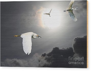 Night Of The White Egrets Wood Print by Wingsdomain Art and Photography