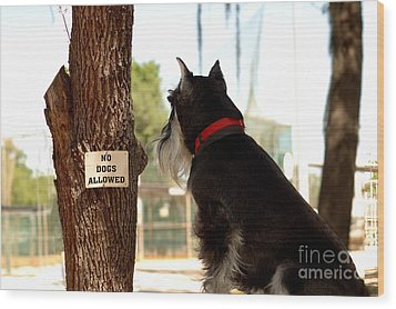 No Dogs Allowed Wood Print