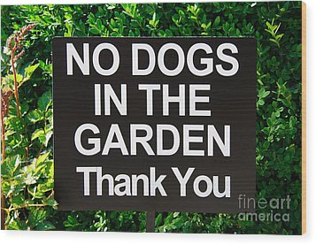 No Dogs In The Garden Thank You Wood Print by Andee Design