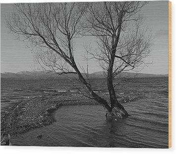 No Tree Is An Island Wood Print by Jeff Moose