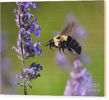 Non Stop Flight To Pollination Wood Print by Sue Stefanowicz