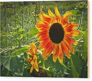 Noontime Sunflowers Wood Print by Jiayin Ma