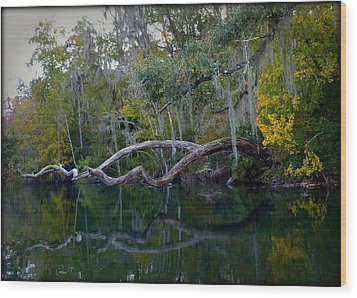 North Florida River Reflections Wood Print by Carla Parris