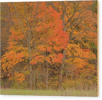 Northeast Fall Colors Wood Print by Stephen  Vecchiotti
