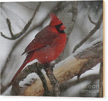 Northern Cardinal In Snowstorm Wood Print