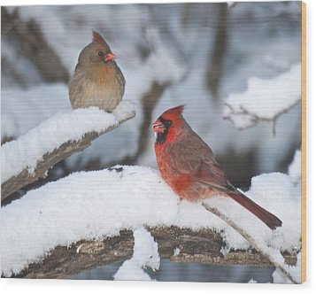 Northern Cardinal Pair 4284 2 Wood Print by Michael Peychich