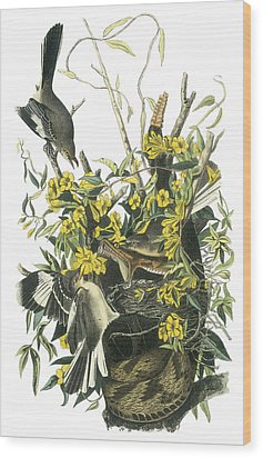 Northern Mockingbird Wood Print by John James Audubon