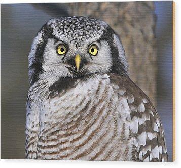 Northern Predator Wood Print