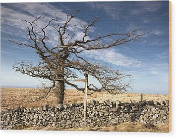 Northumberland, England A Leafless Tree Wood Print by John Short