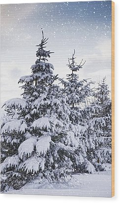 Northumberland, England Snow-covered Wood Print by John Short