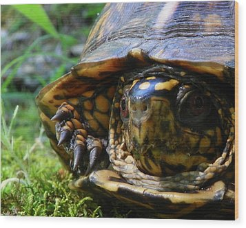 Wood Print featuring the photograph Nosey Turtle by Chad and Stacey Hall