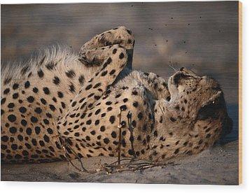 Not Even A Swarm Of Flies Disturbs An Wood Print by Chris Johns