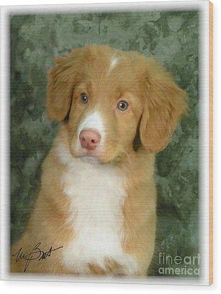 Nova Scotia Duck Toller Pup Wood Print by Maxine Bochnia
