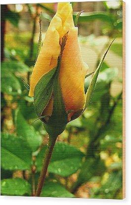 November Rose Wood Print