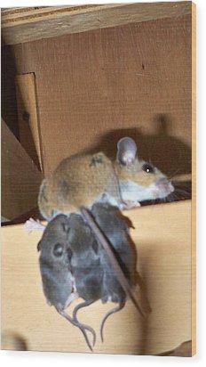 Nursing Baby Mice Wood Print by Danielle Mell