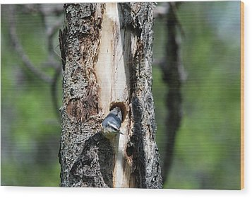 Nuthatch At Nest Site Wood Print