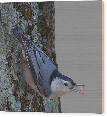Wood Print featuring the photograph Nuthatch by Brian Stevens
