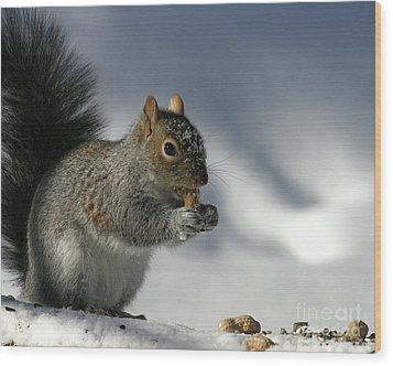 Nutty About Winter Wood Print