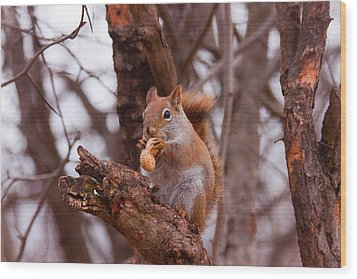 Wood Print featuring the photograph Nutty Squirrel by Josef Pittner