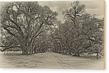 Oak Alley 3 Antique Sepia Wood Print by Steve Harrington