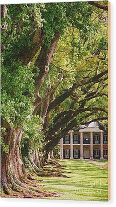 Oak Alley Trees Wood Print