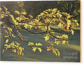 Oak Leaves In The Sunlight Wood Print by Bruno Santoro