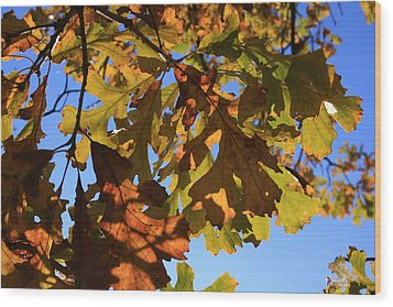 Oak Leaves With Backlighting Wood Print by Lyle Hatch
