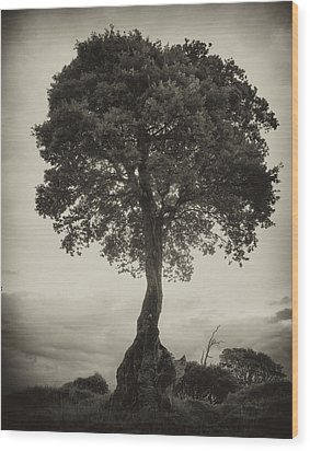 Wood Print featuring the photograph Oak Tree by Hugh Smith