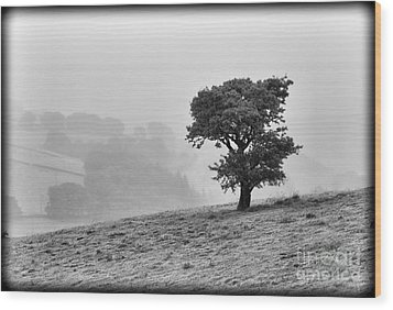 Wood Print featuring the photograph Oak Tree In The Mist. by Clare Bambers