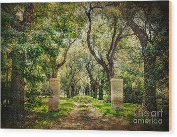 Oak Tree Lined Drive Wood Print by Joan McCool
