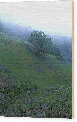 Oak With Lupine In Fog Wood Print by Kathy Yates