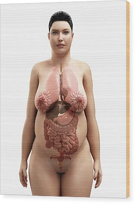 Obese Woman's Organs, Artwork Wood Print by Sciepro