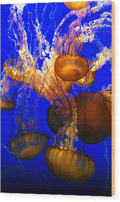 Ocean Jellyfish Wood Print by Anthony Citro