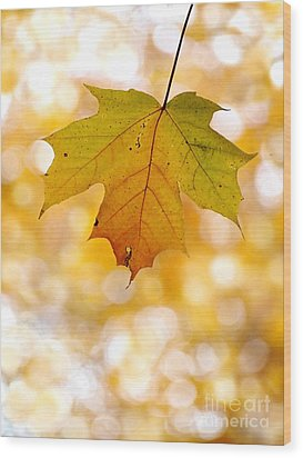 October Maple Leaf Wood Print by Angie Rea