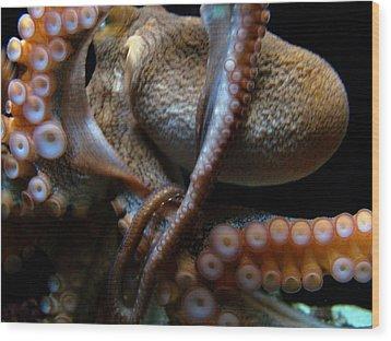 Octopus 1  Wood Print