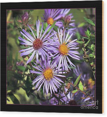 Odd Aster Out Wood Print by Darleen Stry