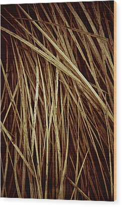 Of Needles And Haystacks Wood Print by Odd Jeppesen