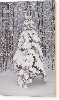 Wood Print featuring the photograph Oh Christmas Tree by Krista Ouellette