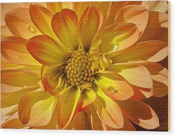 Oh Dahlia Wood Print