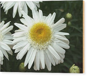 Wood Print featuring the photograph Oh Daisy by Carol Sweetwood