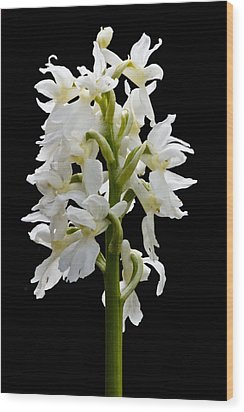 Wood Print featuring the photograph O'kelly's Spotted Orchid by Rob Hemphill